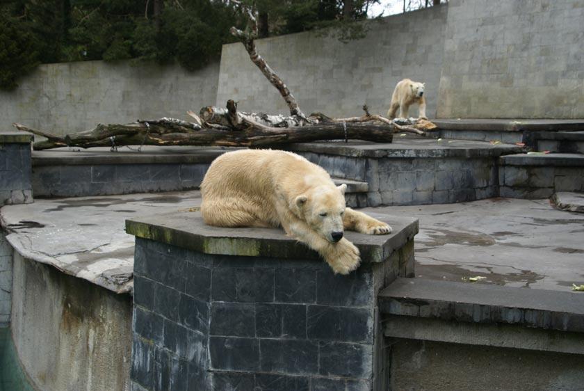 Die Eisbären im Rostocker Zoo erhalten mit dem Polarium ein neues Zuhause.