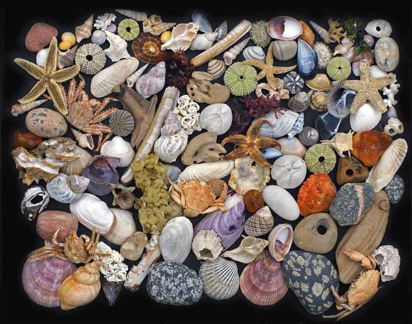 Im deutschen Meeresmuseum in Stralsund ist die Ausstellung Strandfunde zu bewundern.