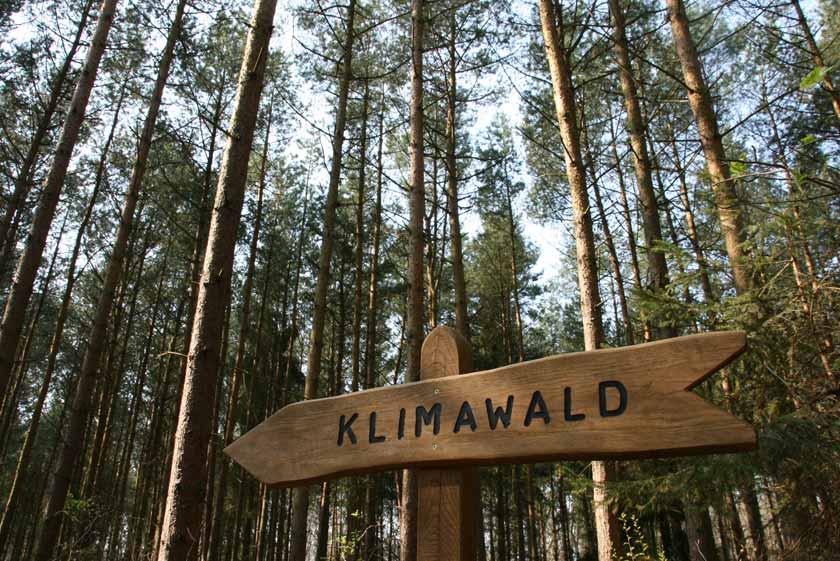 Kaufen Sie eine Waldaktie für MV statt Böller und Raketen und unterstützen Sie den Klimawald nahe Koserow auf der Insel Usedom.