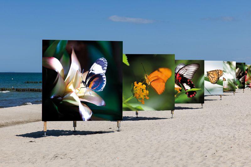 Bilder von Schmetterlingen am Zingster Strand.